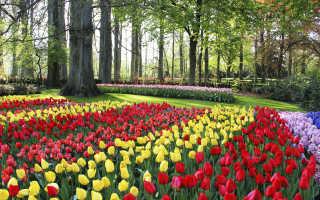 Куда съездить отдохнуть на майские праздники по России