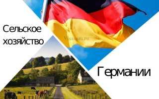 Сельское хозяйство Германии: отрасли и специализация, работа на фермах