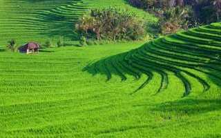 Вьетнам: краткое описание и характеристика страны