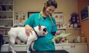 Сколько зарабатывают и получают ветеринары в США