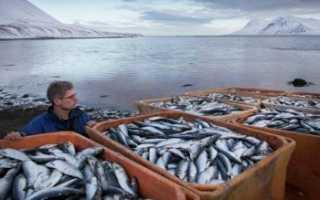 Экономика, промышленность и сельское хозяйство Исландии